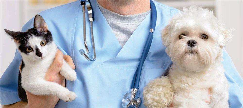 Free Examination of Pets